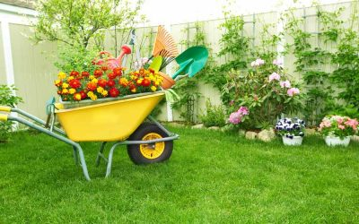 Is Softened Water Safe for Plants? Here's the Scoop.